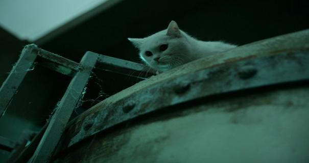 the cat 3
